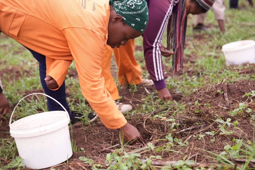 What You Sow, You Will Reap – Inundo Development